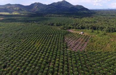 Les monocultures détruisent la forêt tropicale, la base d'existence de la population autochtone. | © Pain pour le prochain/Urs Walter