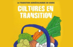 cultureentransition